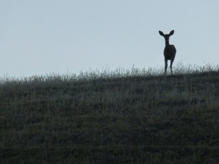 After dawn, making Coffee, I see this on the ridge
