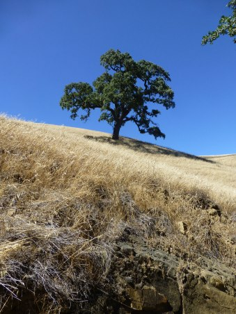 It's a tree; there's no shade; its 106 degrees out
